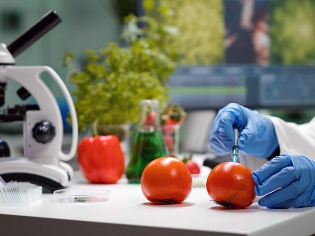Manos con guantes quirúrgicos en laboratorio con tomates y microscopio